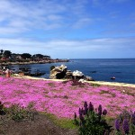 Beautiful bike ride in Monterey. Day I won't forget.