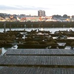 Sea Lions at Fisherman's Wharf.